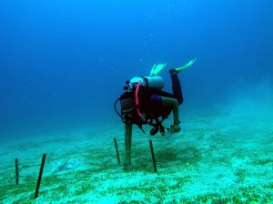 Seagrass exclosures (Picture: Vardhan Patankar)