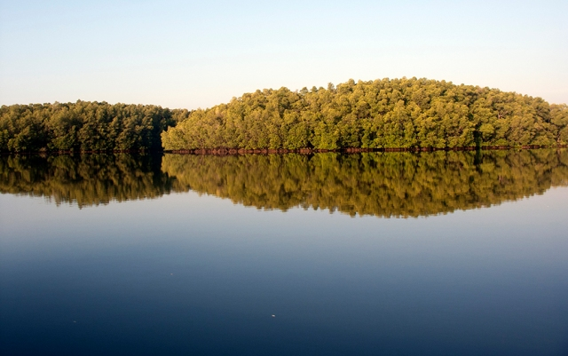mangrove-cover-in-middle-andaman_image_vardhan-patankar